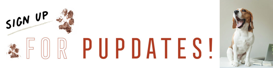 VC-Website-Banners-2021_pupdates-2160