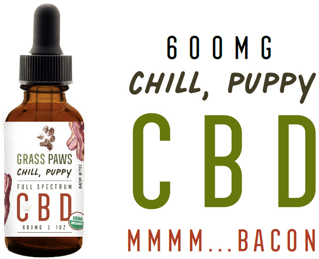 chill-puppy-640