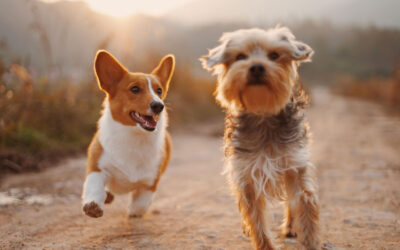 Love the Fur You're In: CBD for Pet Allergies
