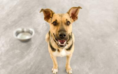 Welcome Home: Rescue Pets + CBD