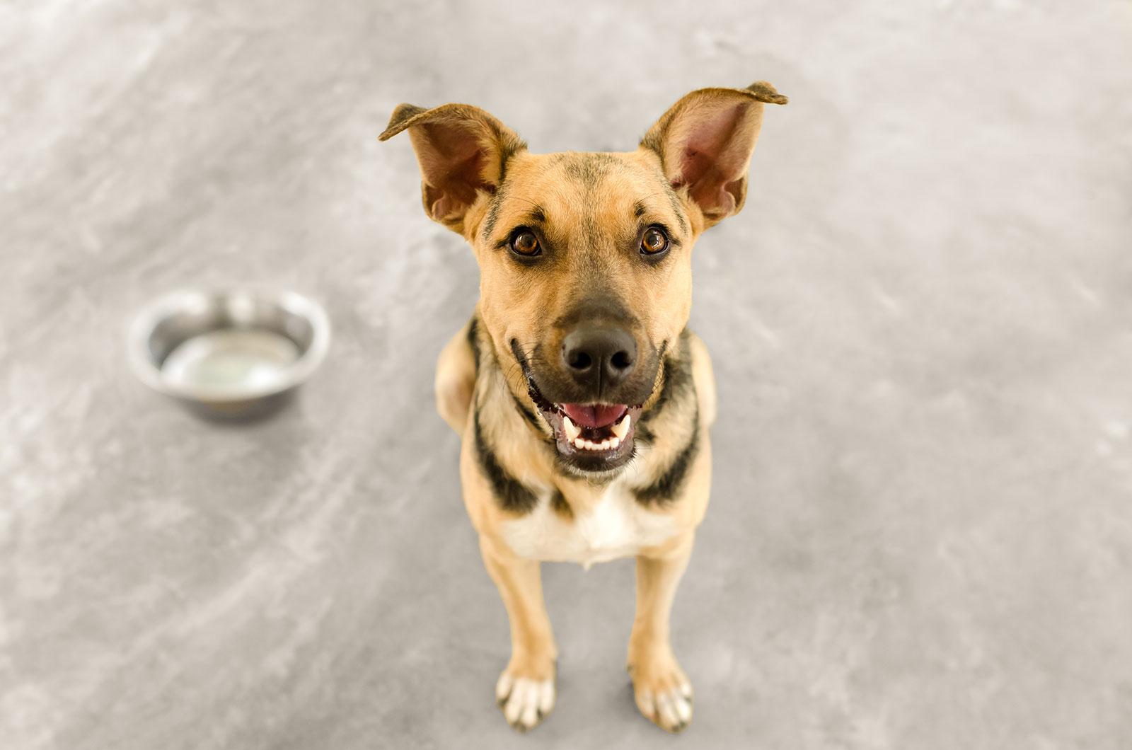 Welcome_Home_CBD_Rescue_Pets_4_22_21-2-1600
