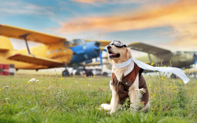 Can I Fly with My Pet's CBD?