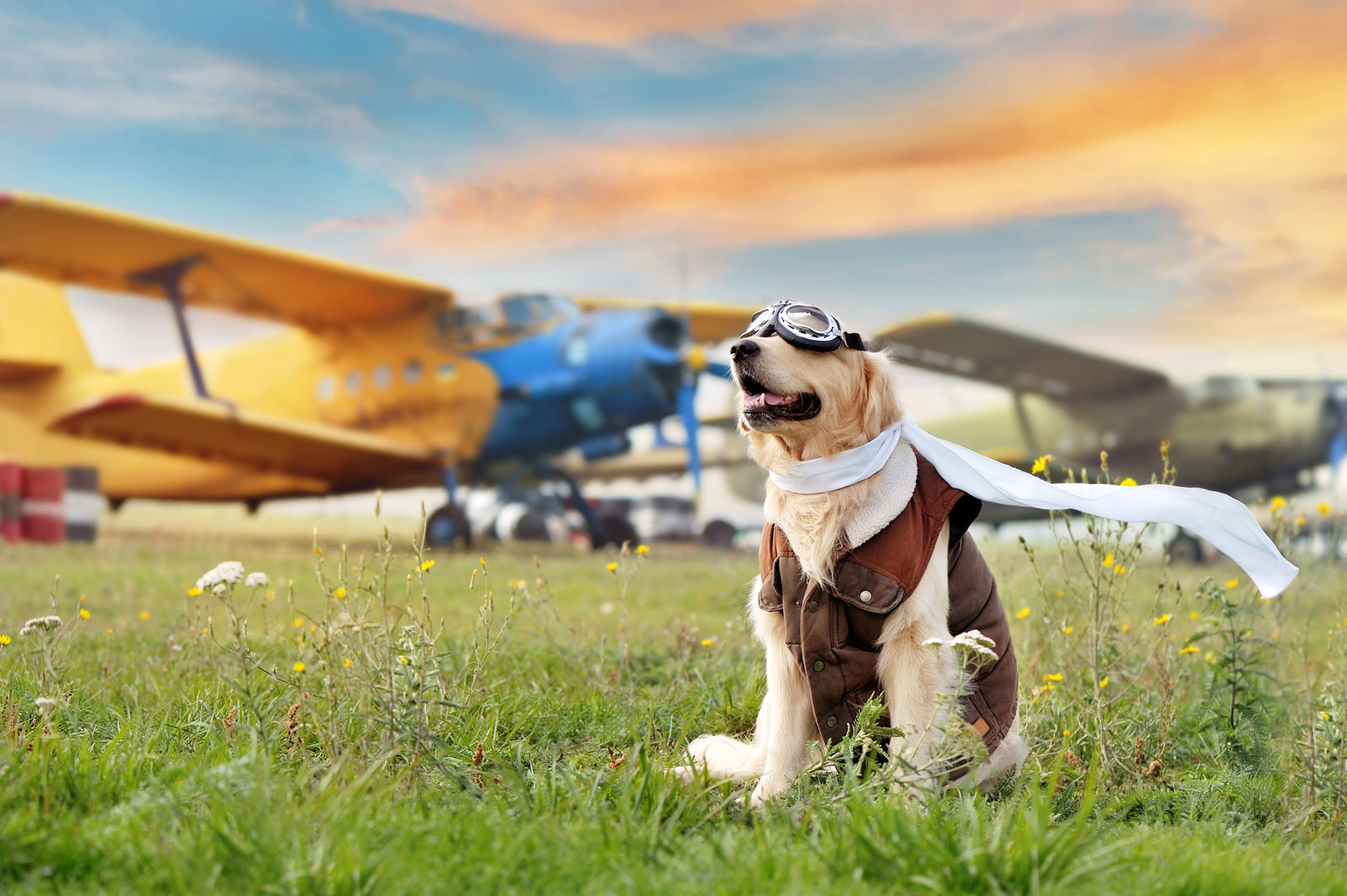 Can_I_Fly_with_My_Pets_CBD_05_20_21