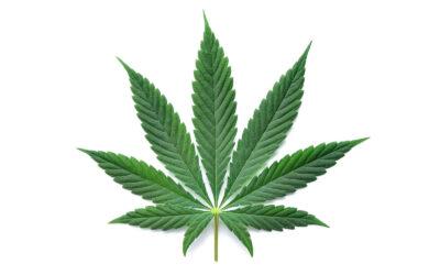 Is Hemp an Adaptagenic Plant?