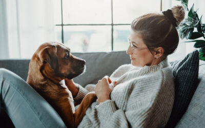 CBD and our Pet's Epilepsy — Does it work?