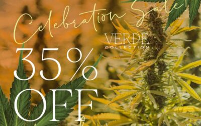 Hooray for Harvest! Celebrating with 35% off!